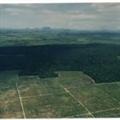 Thumb - Apostila Dinâmica Biológica de Fragmentos Florestais