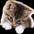 Thumb - Quer Aprender a Cuidar Bem do Seu Gato?